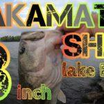 【琵琶湖バス釣り】サカマタシャッド8インチを琵琶湖のデカバスが喰いまくる!琵琶湖南湖東岸津田江夕マズメにデプスのサカマタシャッドを泳がすとハスをベイトにするゴーマルからロクマル級のブラックバスを狂わす