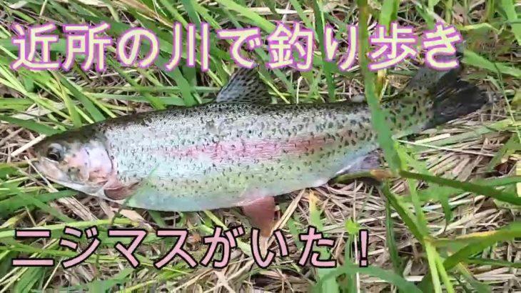北海道恵庭市内の川で釣り歩き!ニジマスがヒットした~!!!
