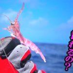 ピンクのエビでマグロが釣れる!?【久米島】