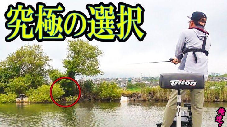 【カエルと魚】好きなエサはどっち?
