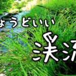 【渓流ルアー】道路脇を流れるいい感じの川で釣り!