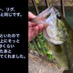 【初心者ルアーマンの釣果記録】ブラックバス釣れた。