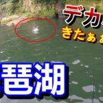 【琵琶湖】バス釣り初心者が2週連続でやらかす・・・