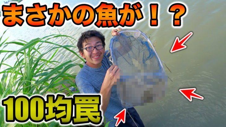 川で絶対に釣れるチヌの罠作ったらとんでもない魚が釣れてしまったwww【手作り100均罠】