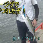 ダイソージグでサバが釣れたよ!!僕はのんびりサビキ釣り!!2020/7/22鳴尾浜海釣り公園