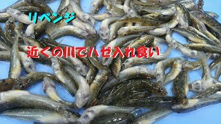 ♯27【釣りブログ】 近くの川にハヨ釣りに行ってみた。後編