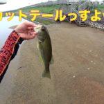 ブラックバス サイトフィッシング後編見えバス釣り ワッキーリグは便利【328】虫くん釣りch