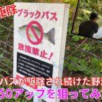 ブラックバスが駆除され続けた野池で、50アップを真剣に狙ってみた。【外来種】【駆除】【バス釣り】