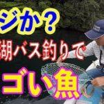 まさかのすごい魚ヒット!芦ノ湖バス釣り fishing in Japan