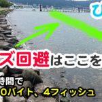 バスが釣れない時ここを狙えばボウズ回避できます。in琵琶湖南湖おかっぱり