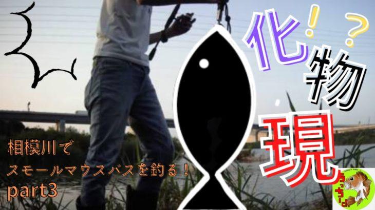 相模川でスモールマウスバスを釣る!!part3