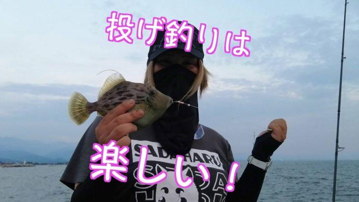 キジハタ&カワハギ!!投げ釣りで高級魚連発!