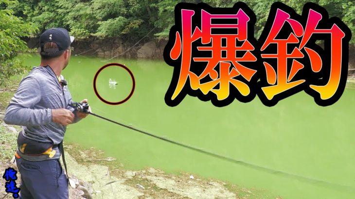 真夏に釣りまくる方法を一足先に公開しちゃった。