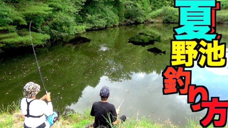夏の野池で「ブラックバス」を釣る方法をゆっくり解説しながら実践します!【ルアー選びと野池の釣り基本戦術解説】