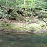 #渓流#川釣り#札幌#山       綺麗な水!川釣り!!