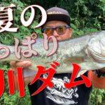 【サイトフィッシング】真夏のバス釣り!芹川ダムに陸っぱりで挑む!