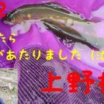 鮎釣り 神流川 上野村 愛竿逝く