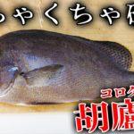 鎧の様な硬いウロコを身にまとった魚を捌いて食べる!