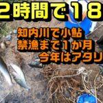 知内川で小鮎ラストスパート 2時間で188匹