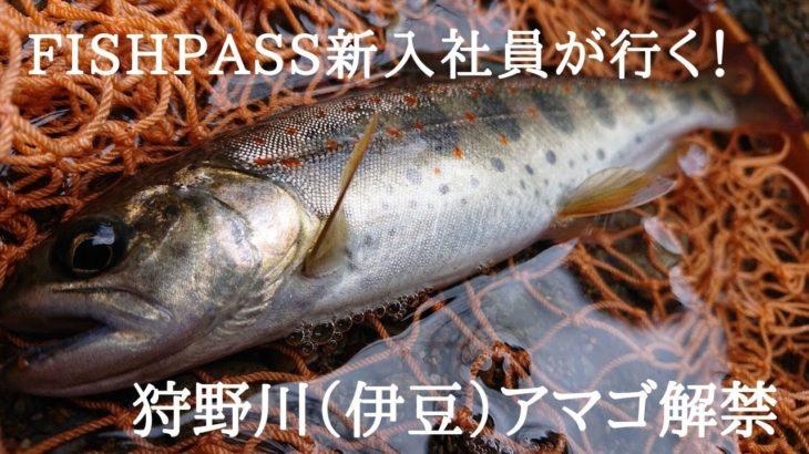 狩野川 アマゴ解禁2020