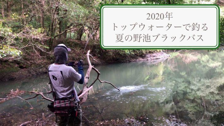 トップウォーターで釣る長崎の野池のブラックバス【2020年夏】