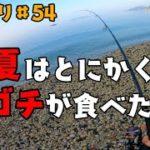 まい釣り54 真夏のサーフでマゴチを狙う!