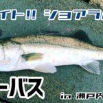 俺の釣り by HHF 際バイト!! ショアラバー シーバス in 瀬戸内海 堤防