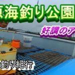 【ゆっくり】久しぶりの海釣り公園【サビキ釣り】