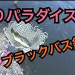 千葉県 釣りパラダイスさんでブラックバス釣り コロ釣 関東