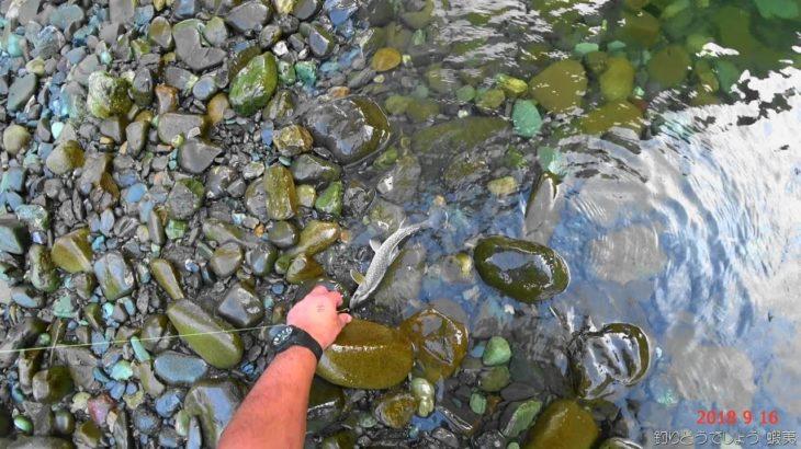 空知川でアメマス釣り。