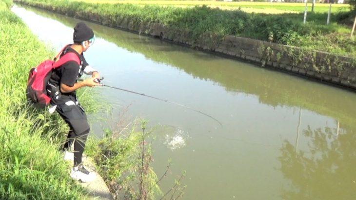超濁りの川が「無限」に魚が釣れる神水路だった!【前半戦】