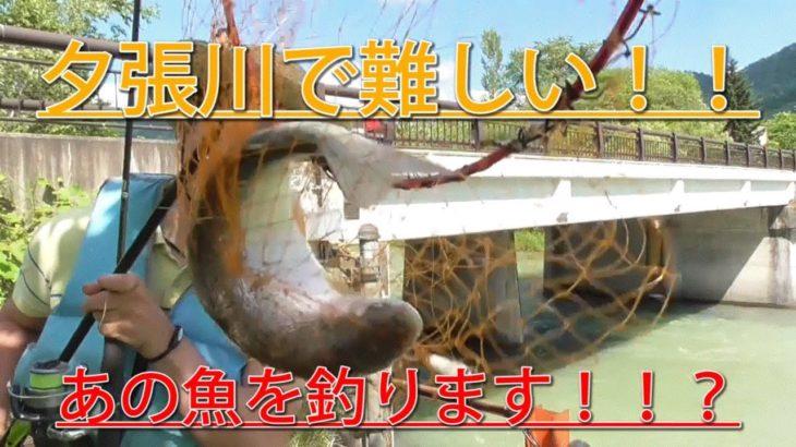【釣り】夕張川で難しい!あの魚を釣ります!!
