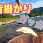 【鮎釣り】背掛かりガッポシ!背バリもガッポシ!?
