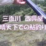 三面川 西興屋 晴天下での鮎釣り