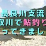 長良川支流|板取川鮎釣り日記