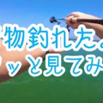 新居海釣り公園で青物さっと釣って帰る。【浜名湖】
