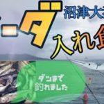 【爆釣沼津静浦】悪天候でもソーダカツオ入れ食い【港堤防投げサビキ釣り】