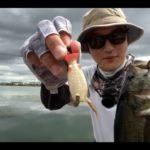 【生放送】琵琶湖おかっぱりバス釣りライブ!バスターク(フロッグ)で釣れた!