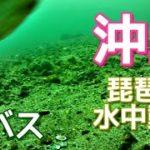 【琵琶湖の水中動画】沖島北端はタヌキのようなブラックバスが居る説