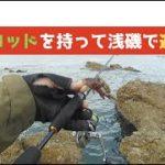浅い磯場で海釣りを学ぶ フグ、カマス、キジハタ…〔#7〕