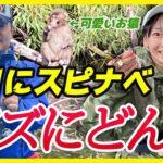 9月にスピナベ、バズにどん!@亀山 亀山ダム/バス釣り