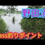 琵琶湖 野田沼(東浅井郡)湖北ブラックバス釣りポイント 滋賀県バス釣りスポットmp4