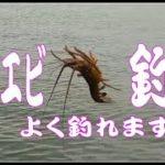 伊勢エビ釣り 夜釣り禁止・・早朝堤防釣り