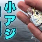 【とっとパーク小島】大阪海釣り公園で飲ませサビキをしたら○○○大が釣れた!!