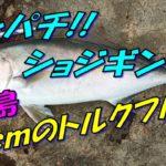 【磯釣り】沖ノ島、御門のタカリでカンパチショアジギング!!【青物】