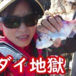 フカセ釣り 「これが現実」小豆島でチヌを釣る!つもりでした。釣りって難しい… 【前編】