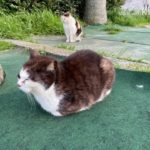 浜名湖海釣り公園の猫大集合!