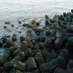[磯釣]#除了臭度海裏面好像都沒有其他魚