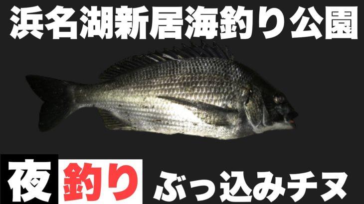チヌの夜釣り #浜名湖#釣り