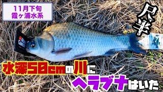 【11月下旬/霞ヶ浦水系】両グルテン、へらぶな釣り。かなり浅い川でヘラブナが釣れた‼︎ #56
